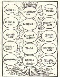 Albero di Porfirio